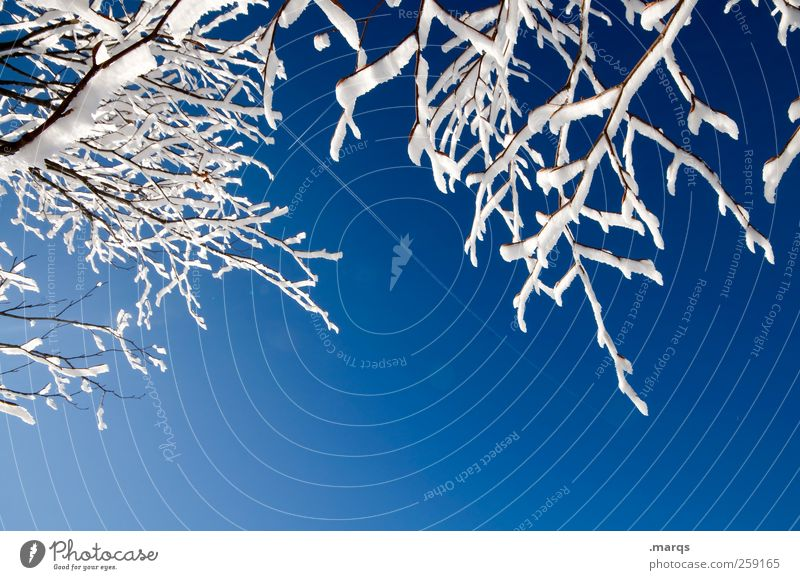 frost Winter Winter vacation Mountain Environment Nature Cloudless sky Climate Beautiful weather Ice Frost Snow Branch Cold Blue White Relaxation