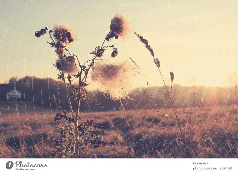 Nature White Plant Sun Flower Calm Yellow Environment Landscape Autumn Grass Warmth Moody Brown Field Gold
