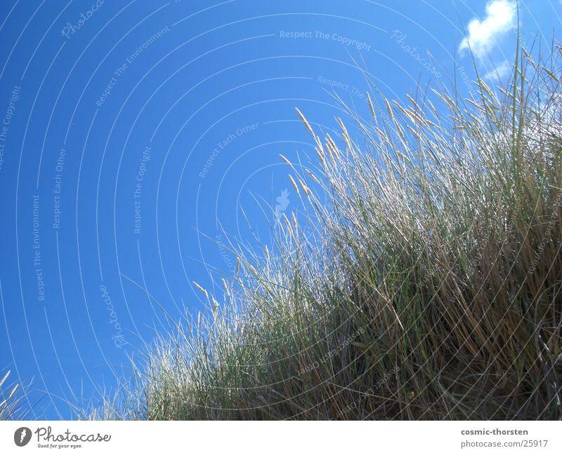 Watch the sky Clouds Green Plant Sky Blue Beach dune