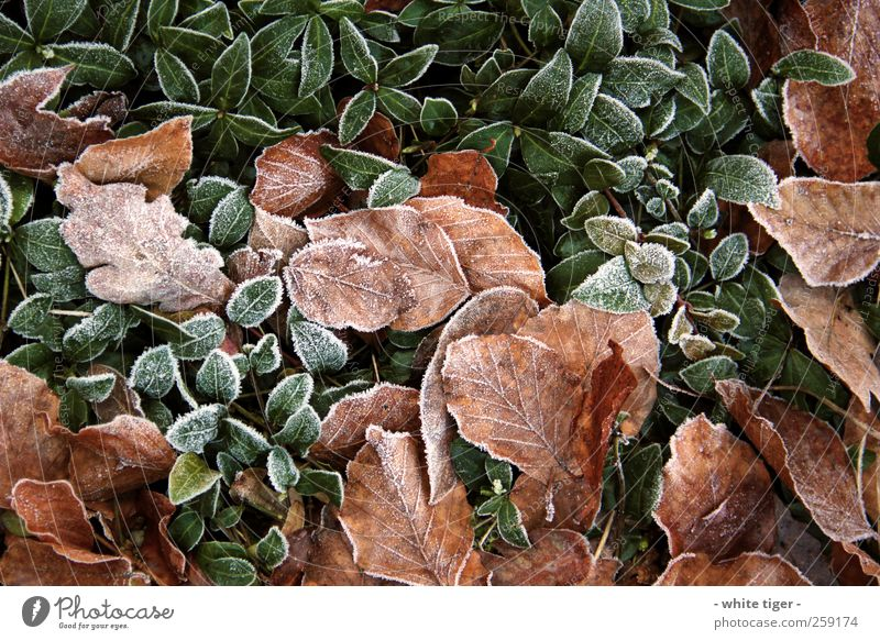 press Nature Plant Winter Ice Frost Cold Brown Green White Calm Leaf Hoar frost Colour photo Exterior shot Close-up Day Contrast Deep depth of field