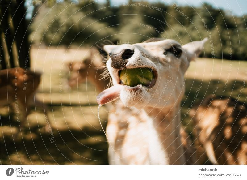 delicious! Nutrition Eating Vegetarian diet Environment Nature Sun Summer Autumn Climate Beautiful weather Park Meadow Field Forest Wild animal Pelt Petting zoo