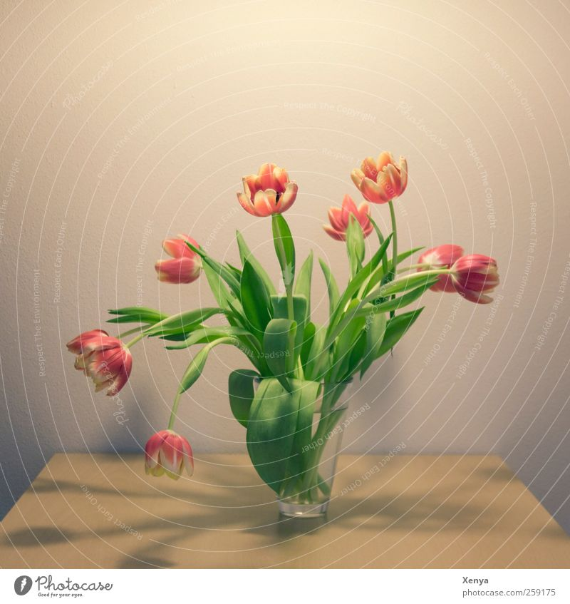 Nine Plant Flower Tulip Bouquet Blossoming Retro Yellow Green Red Spring fever Romance Flower vase Delicate Colour photo Interior shot Deserted Copy Space top