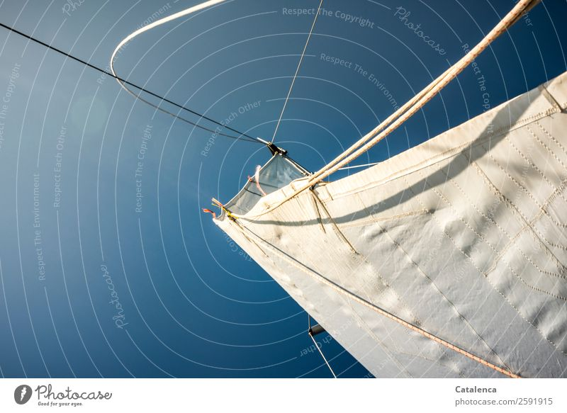 white-blue Leisure and hobbies Vacation & Travel Trip Freedom Summer Summer vacation Ocean Sailing Sky Beautiful weather Sailboat Rope Driving To enjoy Blue