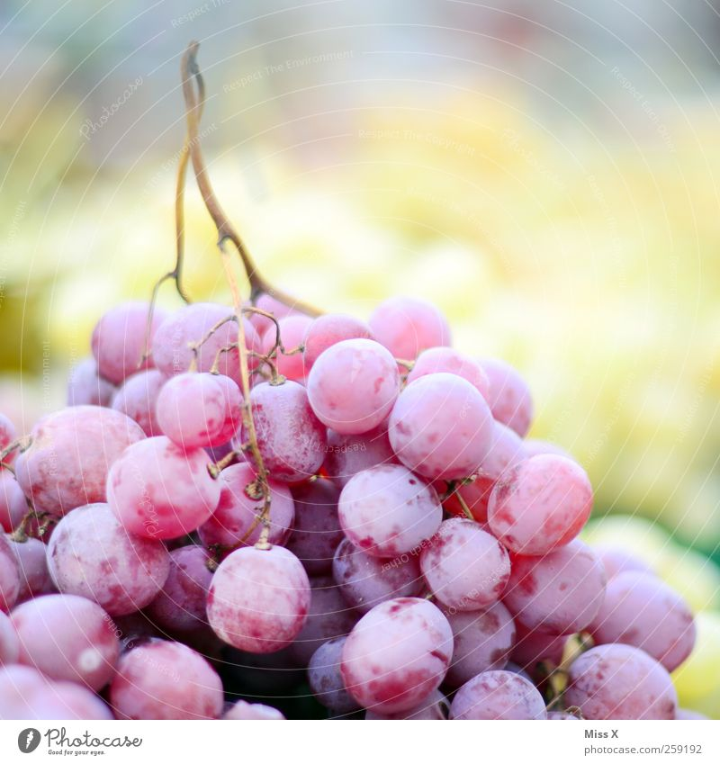 Nutrition Food Fruit Fresh Sweet Violet Delicious Organic produce Juicy Bunch of grapes Vegetarian diet