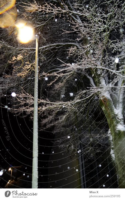 Tree Winter Cold Dark Snow Snowfall Street lighting Night sky Bad weather