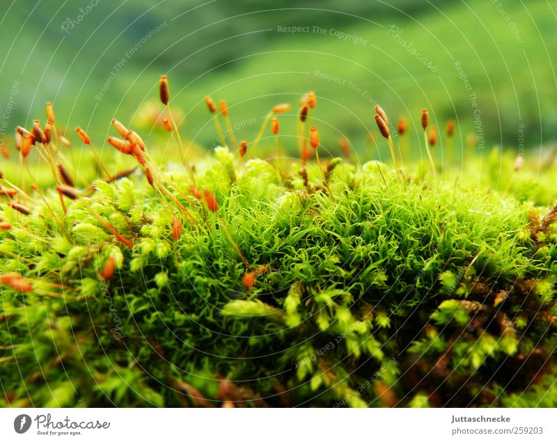 So small, so tender Environment Nature Landscape Plant Earth Spring Summer Moss Foliage plant Wild plant Alps Bog Marsh Deserted Blossoming Faded Growth Fresh