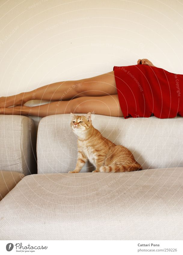 Human being Woman Cat Beautiful Red Animal Adults Relaxation Feminine Small Fashion Body Together Elegant Lie Esthetic