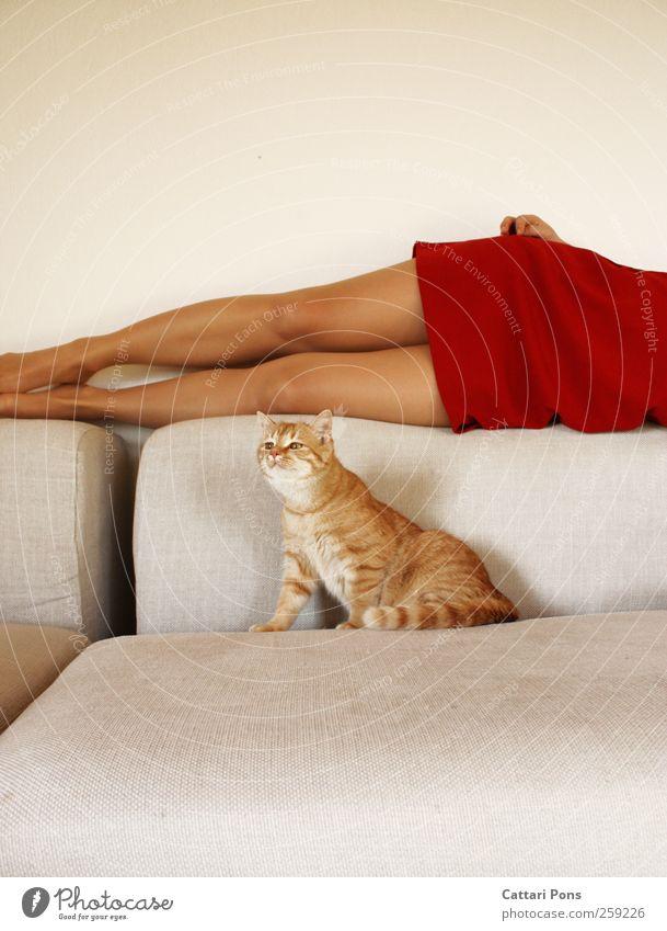 seduced tiger. Body Feminine Woman Adults 1 Human being Fashion Clothing Dress Tights Animal Pet Cat Relaxation To enjoy Hang Lie Esthetic Elegant Exotic
