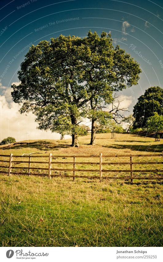 idyllic Environment Nature Landscape Sky Summer Tree Grass Garden Park Meadow Hill Esthetic Blue Yellow Gold Green Emotions Contentment Joie de vivre (Vitality)