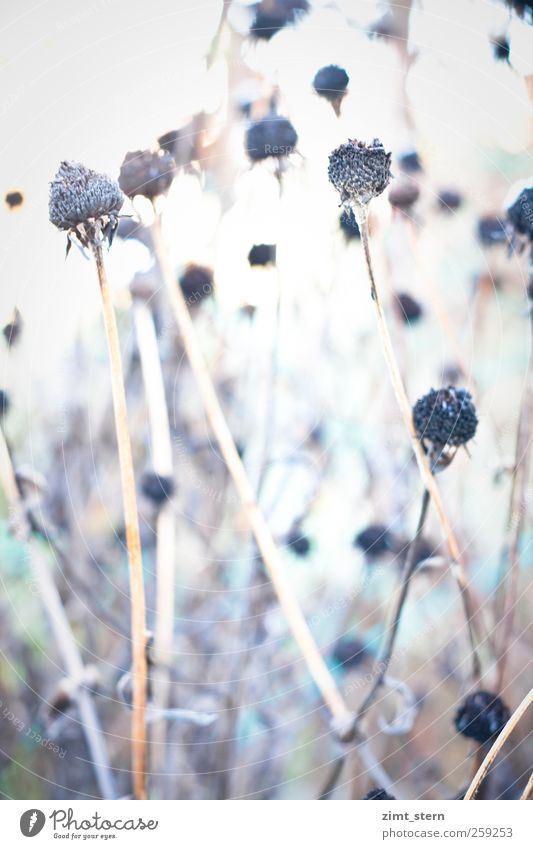 Nature Old White Plant Loneliness Winter Environment Death Cold Autumn Garden Bright Brown Ice Moody Dance