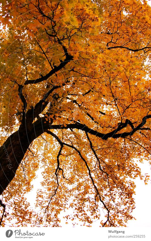 Golden Autumn Calm Nature Plant Beautiful weather Tree Contentment Colour photo Exterior shot Deserted Day Sunlight Worm's-eye view
