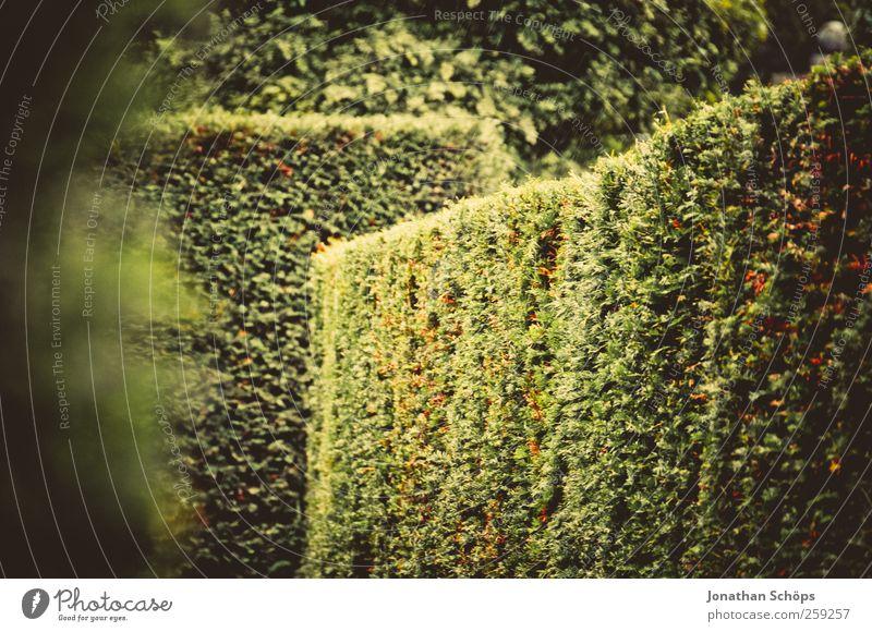 Nature Green Plant Summer Autumn Environment Lanes & trails Garden Park Adventure Esthetic Happiness Corner Bushes Target Joie de vivre (Vitality)