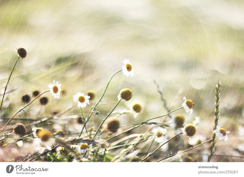 summer meadow Environment Plant Summer Beautiful weather Warmth Flower Grass Blossom Meadow Field Movement Blossoming Fragrance Faded To dry up Growth Emotions
