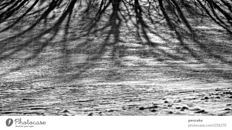 ...there are shadows too! Environment Nature Landscape Sunlight Winter Ice Frost Snow Tree Field Moody Shadow Shadow play Black & white photo Exterior shot