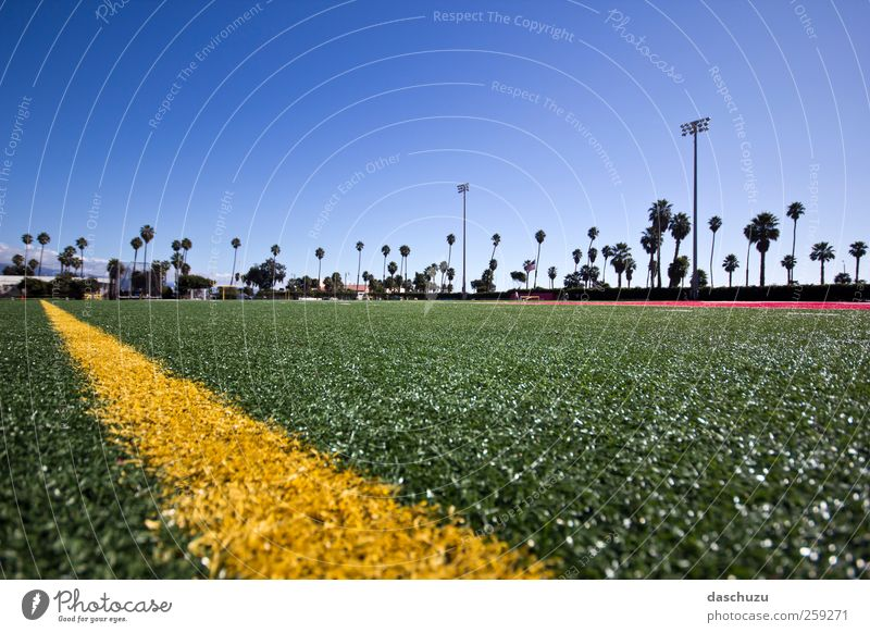 SBCC Football Field Sports Ball sports Sporting Complex Football pitch Stadium St. Barbara USA North America Playing Playing field parameters Beach Palm tree