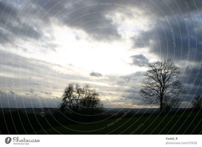 Open Sly Clouds Raincloud Back-light Winter Tree Sky