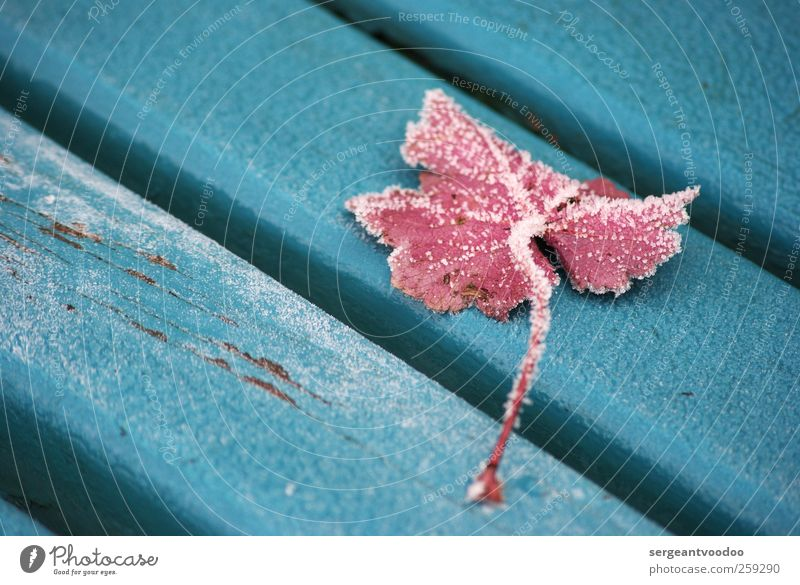 Blue Plant Winter Leaf Colour Calm Death Cold Wood Garden Moody Park Time Ice Pink Change