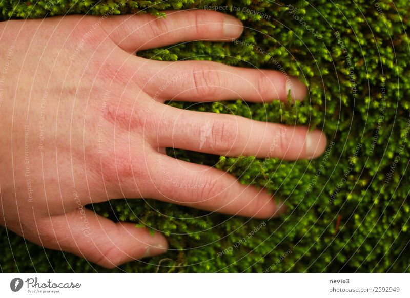 moss carpet Environment Moss Foliage plant Wild plant Green Passion Protection Safety (feeling of) Soft Delicate Light green Carpet of moss Hand Grasp Touch