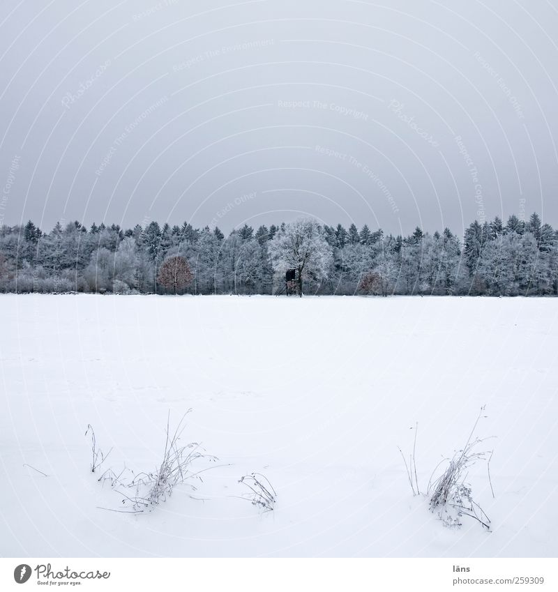 hunter's Latin Snow Plant Sky Winter Tree Grass Field Forest Hunting Blind Gray White Cold Ice Snow layer Snowscape Colour photo Deserted Copy Space top