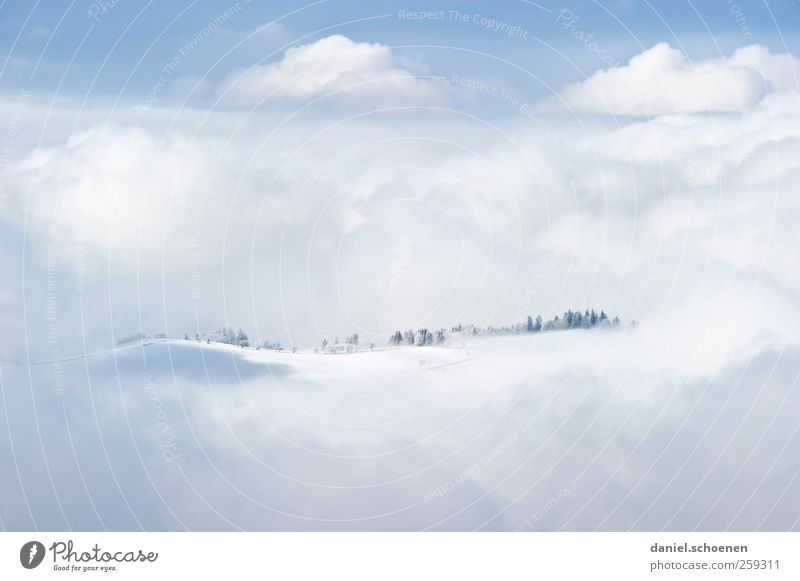 dreamland - in the Black Forest Vacation & Travel Tourism Far-off places Freedom Winter Snow Winter vacation Mountain Environment Nature Landscape Clouds Wind