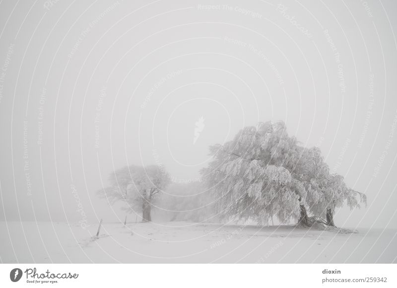 Tree Lobe | Winter Booking Pt.3 Vacation & Travel Trip Adventure Snow Winter vacation Environment Nature Landscape Plant Climate Weather Bad weather Fog Ice