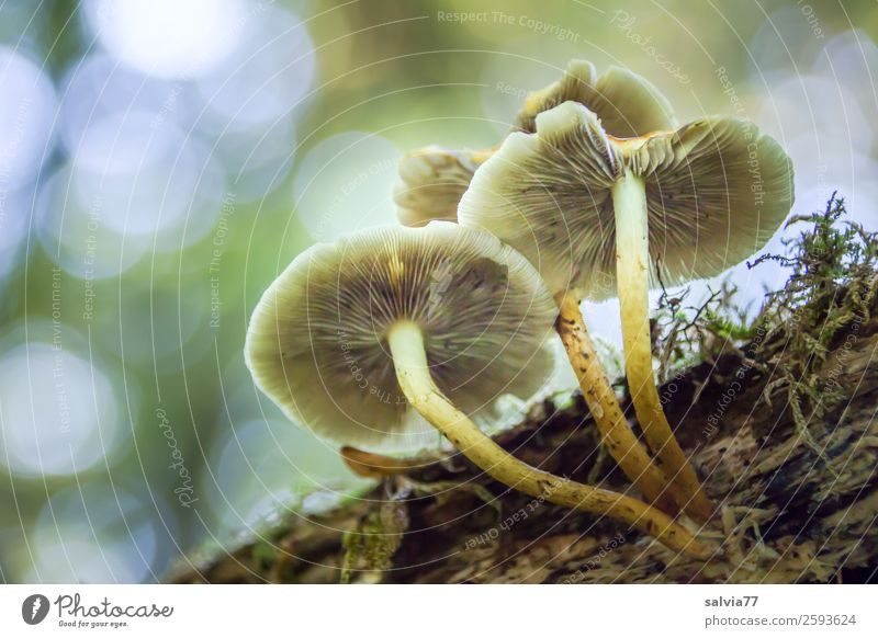 Sky Nature Plant Animal Forest Autumn Environment Growth Transience Change Mushroom Moss Visual spectacle Slat blinds Mushroom cap Woody