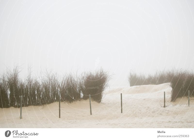 a way out Environment Nature Landscape Sand Fog Plant Bushes itinerant Twigs and branches Coast Beach North Sea Bollard Boundary Rod Pole Bright Cold Gloomy