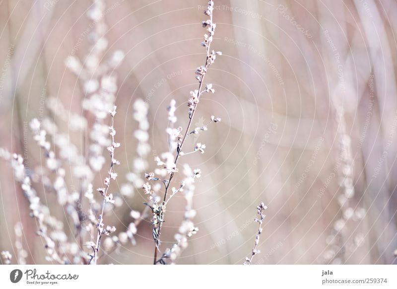 Nature Plant Flower Environment Blossom Spring Natural Esthetic Dry Beige Wild plant