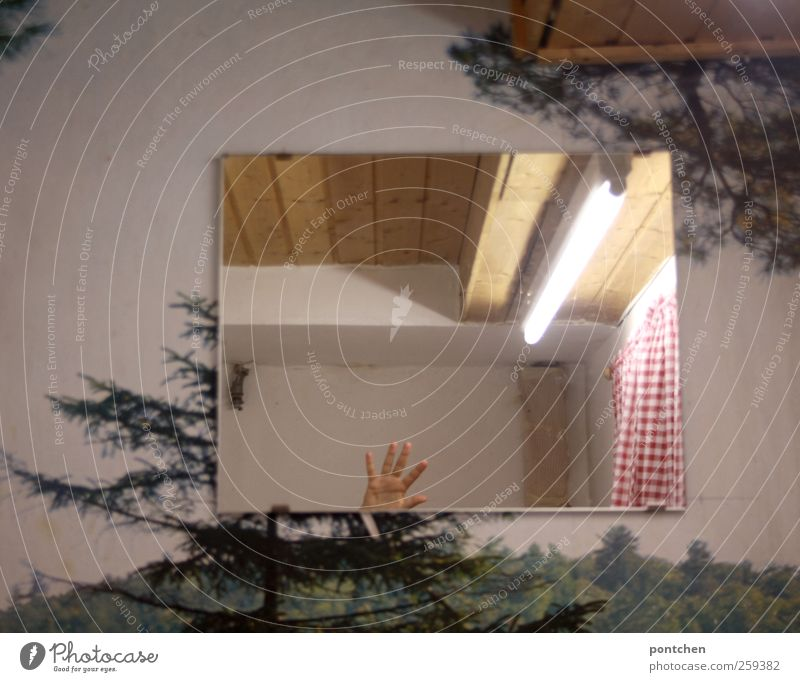 Interior design. Wallpaper with trees. Hand is reflected in the wall mirror. Waving. humor. Mirror Bathroom by hand Red White Wave Toilet Drape Checkered Forest