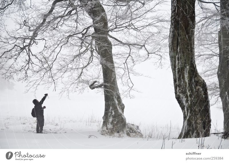 Tree Lobe | Branch Tweezers Man Adults 1 Human being Nature Landscape Winter Bad weather Fog Ice Frost Snow Snowfall Plant Cold White Loneliness Individual