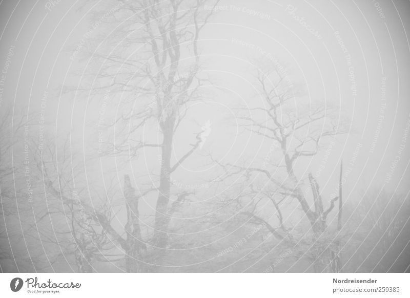 Baumloben | witching hour Nature Plant Elements Winter Climate Bad weather Fog Ice Frost Forest Freeze Creepy Disaster Loneliness End Apocalyptic sentiment Cold