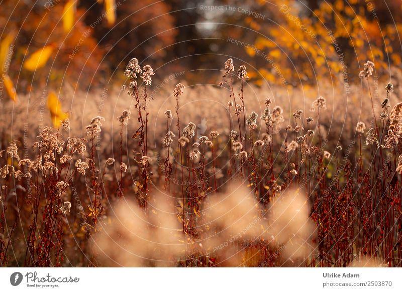 Nature Plant Flower Leaf Warmth Autumn Blossom Natural Sadness Death Orange Brown Decoration Illuminate Field Glittering