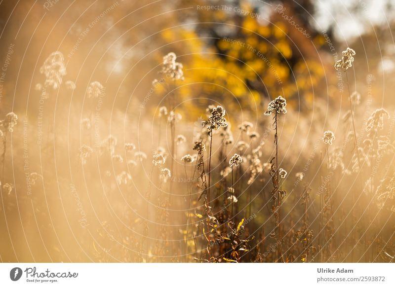 Nature Plant Flower Relaxation Calm Warmth Yellow Autumn Interior design Blossom Meadow Orange Brown Design Contentment Decoration