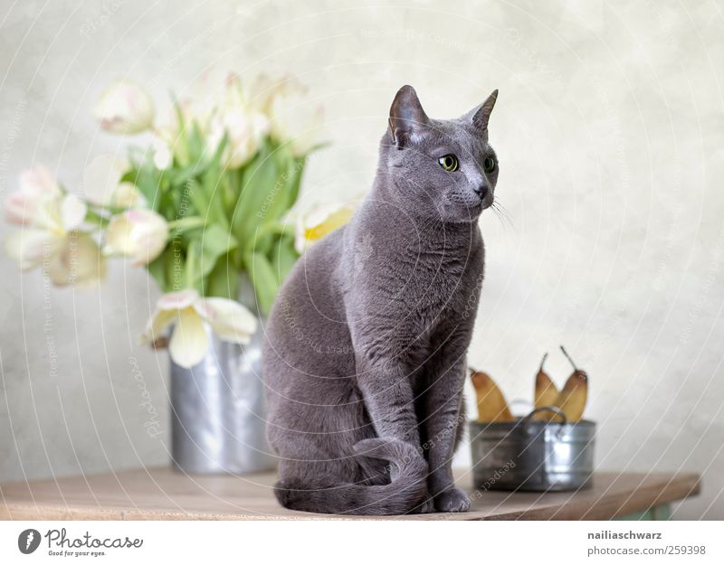Cat Beautiful Plant Animal Relaxation Nutrition Food Wood Blossom Metal Art Fruit Elegant Esthetic Observe Tulip