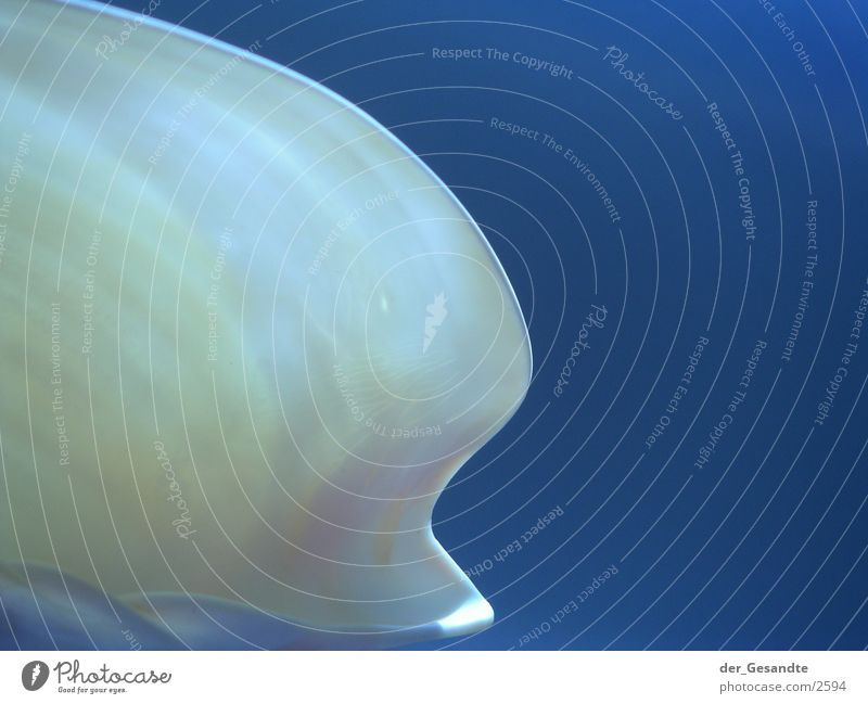 shell-shaped Mussel Light Macro (Extreme close-up) Close-up Structures and shapes Blue Detail Nature Transparent Lamp