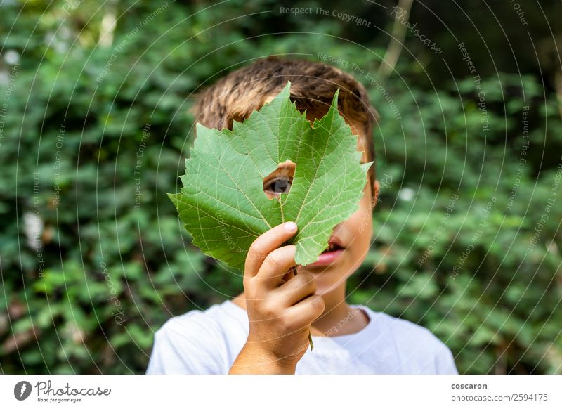 Little boy looking through a hole in a leaf Woman Child Human being Nature Vacation & Travel Plant Beautiful Green White Leaf Joy Forest Lifestyle Adults Yellow