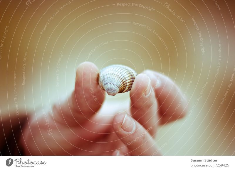 to an ocean Earth Sand Coast Lakeside River bank Beach Discover Accumulate Mussel Shell sand Shell-shaped Hand Fingers Warmth Warm light Treasure
