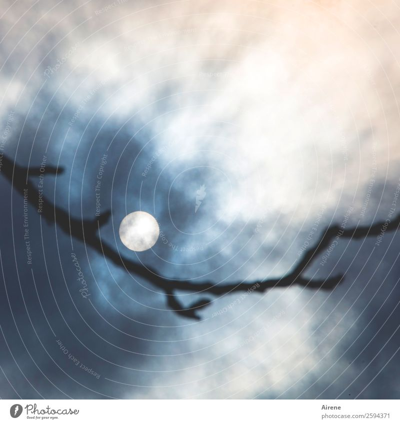 Emotion stirrer with full moon Clouds Night sky Full  moon Twigs and branches Illuminate Exceptional Creepy Uniqueness Round Blue Black White Humble Surprise