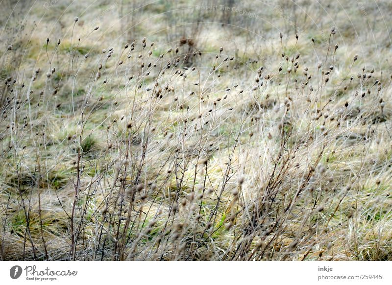 Grasses in the wind Nature Plant Autumn Wild plant Blossom Garden Meadow To dry up Growth Thin Long Natural Beautiful Dry Many Brown Transience Change