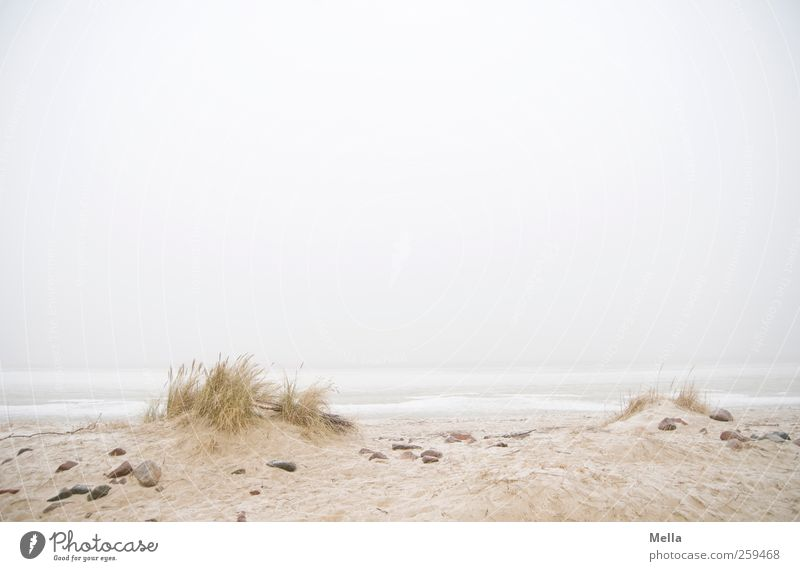 Sky Nature Ocean Beach Calm Far-off places Relaxation Environment Landscape Grass Gray Sand Coast Bright Horizon Fog