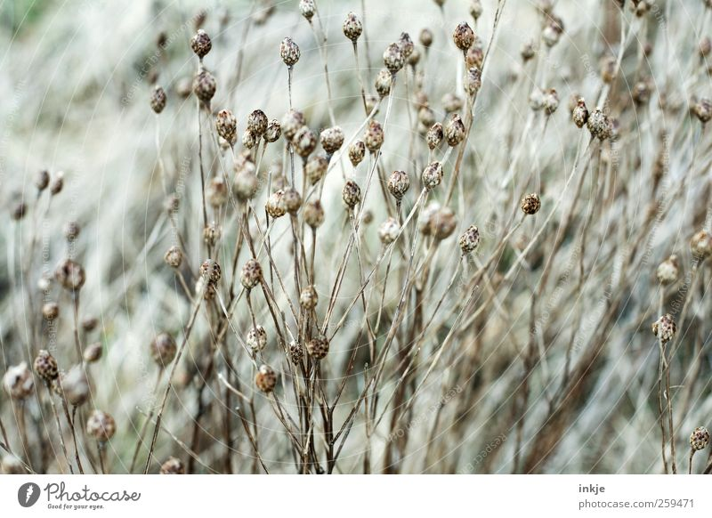 dried flowers Environment Nature Plant Autumn Winter Weather Drought Flower Grass Wild plant Garden Park Meadow Faded To dry up Thin Beautiful Dry Many Moody