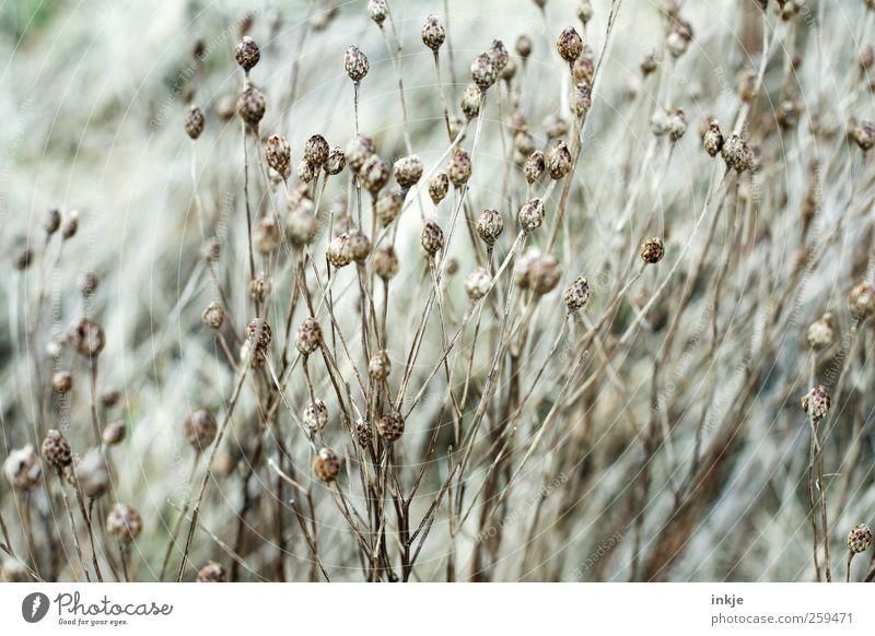 Nature Beautiful Plant Winter Flower Autumn Environment Meadow Grass Garden Moody Park Weather Brown Wild Growth