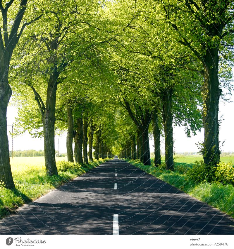 Nature Plant Summer Tree Landscape Environment Lanes & trails Germany Line Transport Authentic Climate Simple Beautiful weather Stripe Driving
