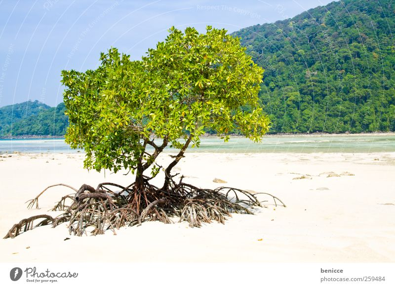 Nature Tree Plant Vacation & Travel Sun Ocean Beach Travel photography Symbols and metaphors Asia Thailand Root Sandy beach Idyllic beach Mangrove