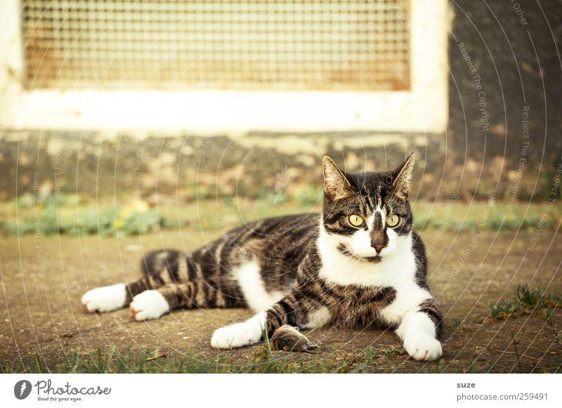 Cat Animal Death Sit Wait Catch Hunting Mouse Pet Domestic cat Muzzle Prey Cat food
