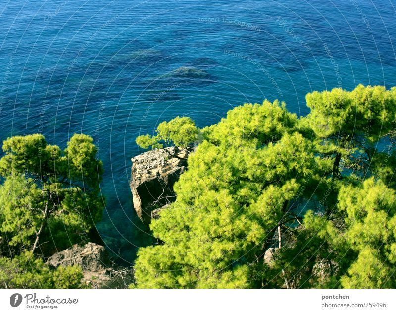 View from above to the sea and pine trees in Greece Vacation & Travel Tourism Summer Summer vacation Ocean Blue green Water Rock Bird's-eye view Calm