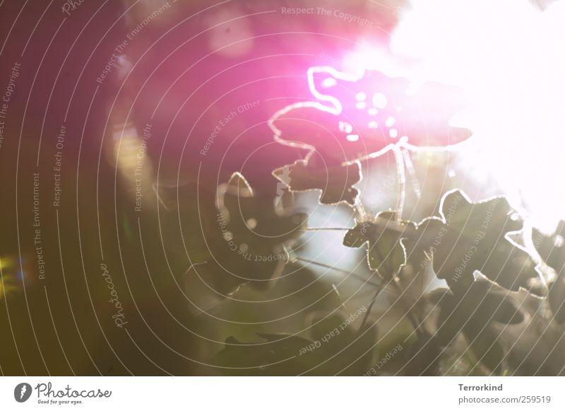 Chamansülz 2011 | reflections Leaf Tree Nature Green Garden Sunbeam Bright White Flashy Pink whatever Shadow