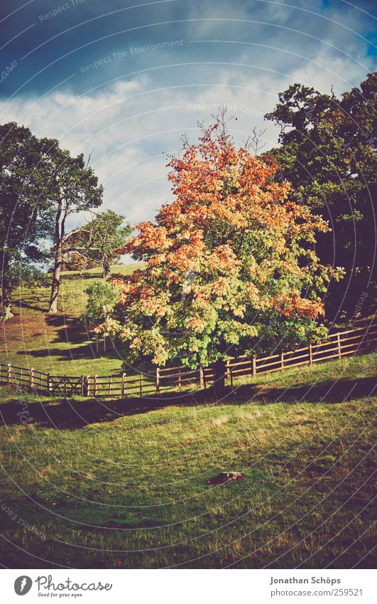 colorful tree in autumn Environment Nature Landscape Autumn Beautiful weather Plant Tree Park Meadow Blue Brown Multicoloured Green Great Britain Fence Pasture