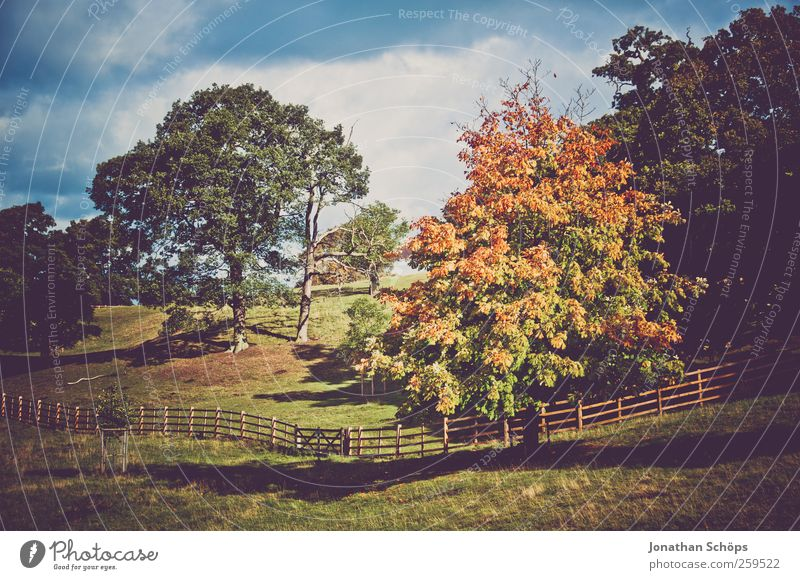colorful tree in autumn +more trees Environment Nature Landscape Sky Plant Tree Grass Park Meadow Hill Happy Pasture Fence Autumnal colours Autumn leaves
