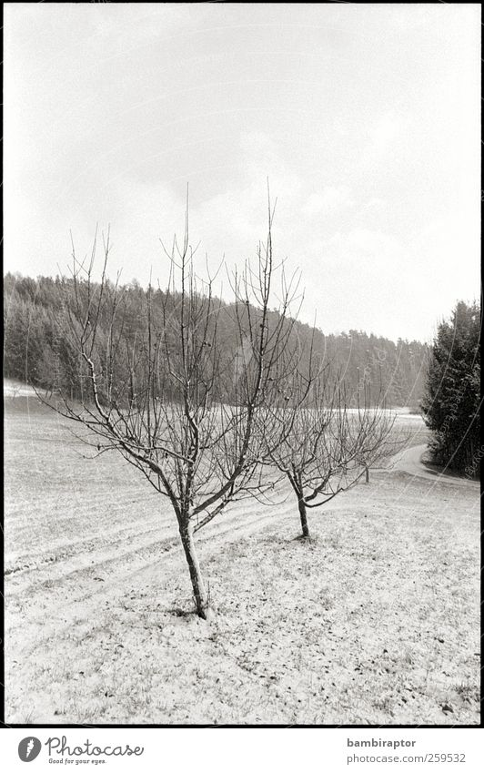 display generic winterly image here Environment Nature Landscape Plant Winter Ice Frost Snow Tree White Cold Branch Analog Black & white photo Exterior shot